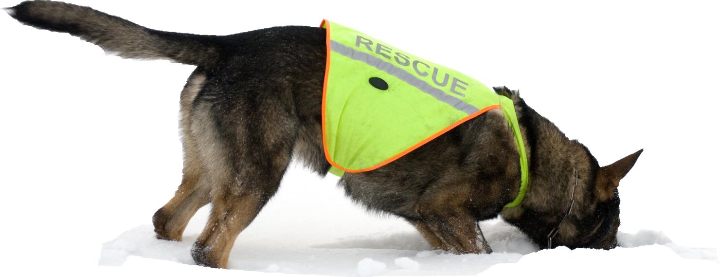 Pes záchranář na sněhu