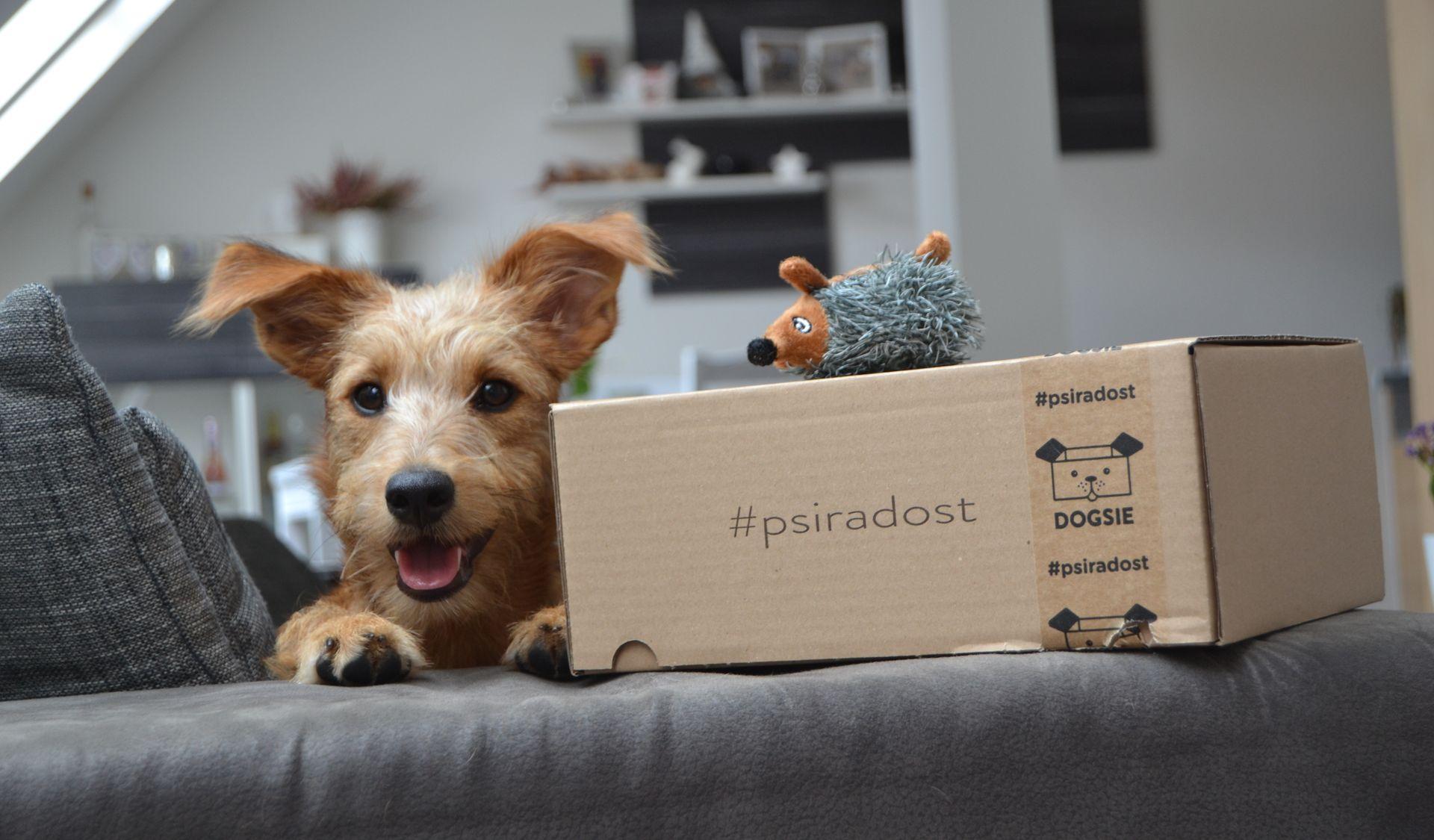 krabicka plna psi radosti