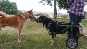 Líza s dalším psem