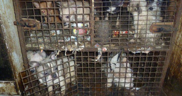 Týraní psi z Kamenice nad Lípou