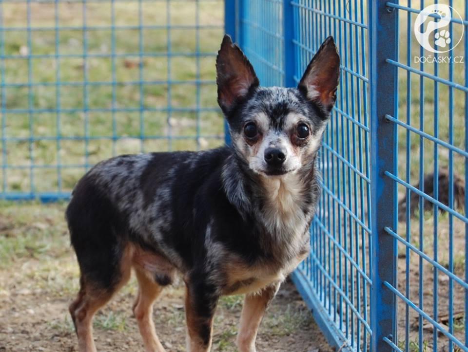týraní psi z Kamenice nad Lipou