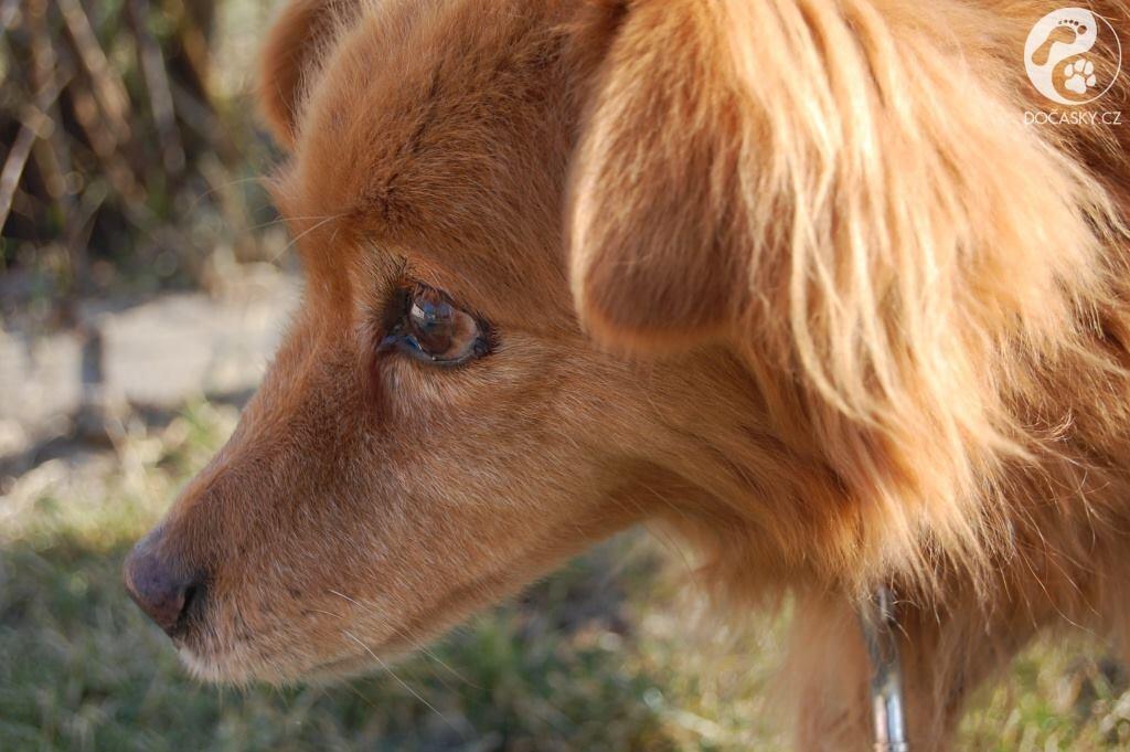 Pes Fox zblízka