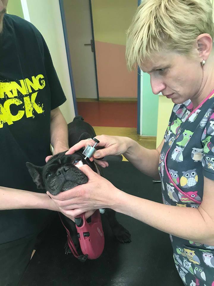 Veterinářka kontroluje Lejlin zrak
