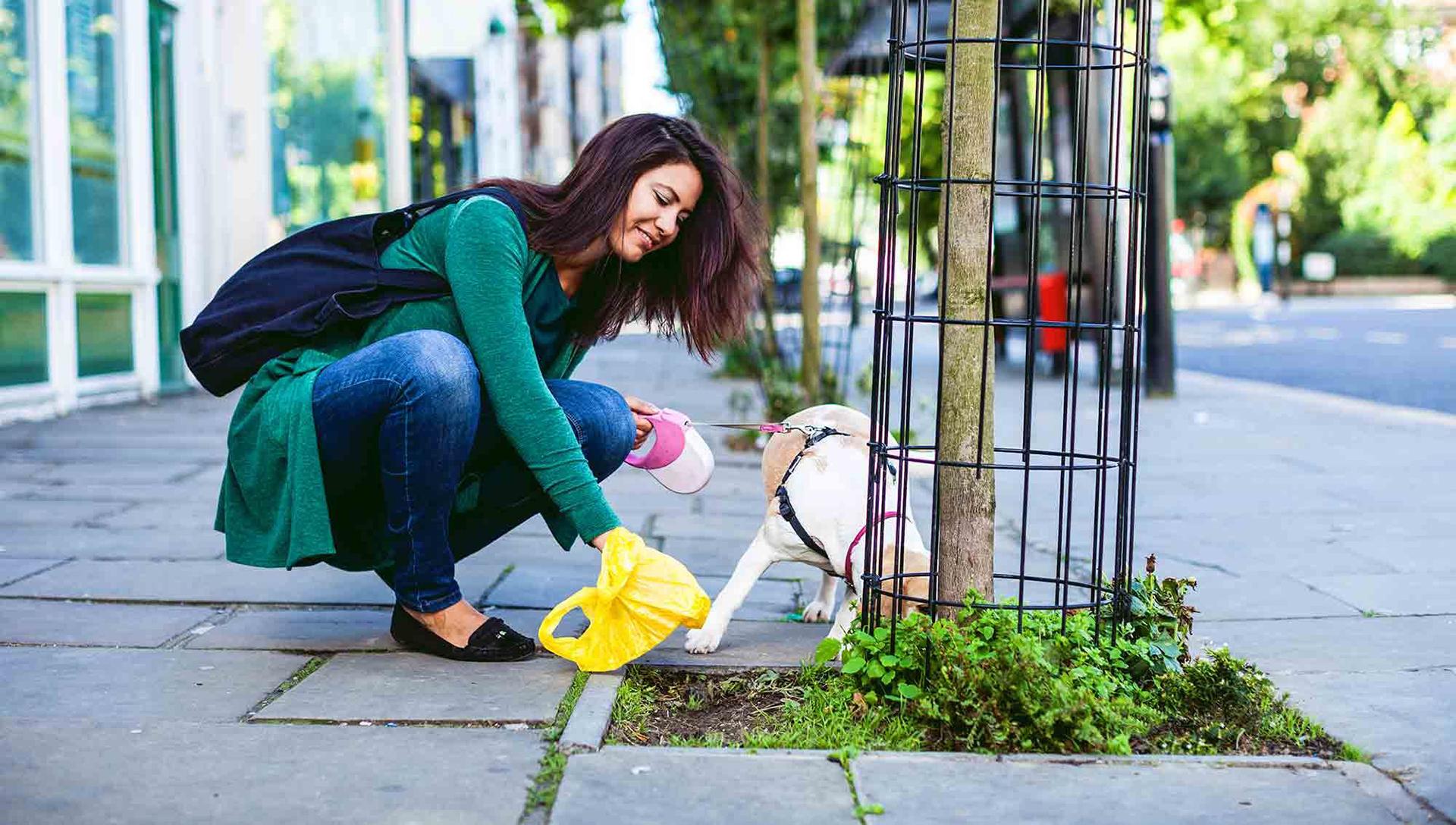 žena sbírá po psovi exkrement
