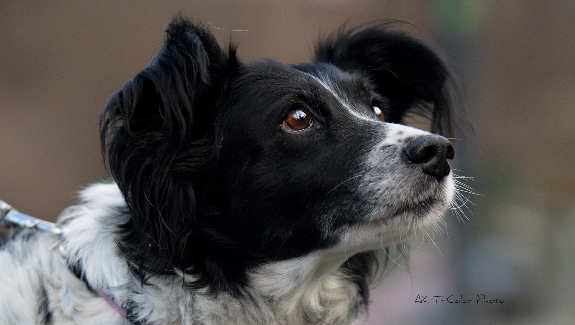 Pes nejvěrnější přítel Mája