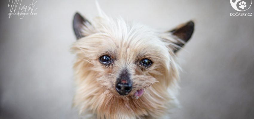 Portrét psa Lopiho
