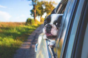 Přeprava psa v autě