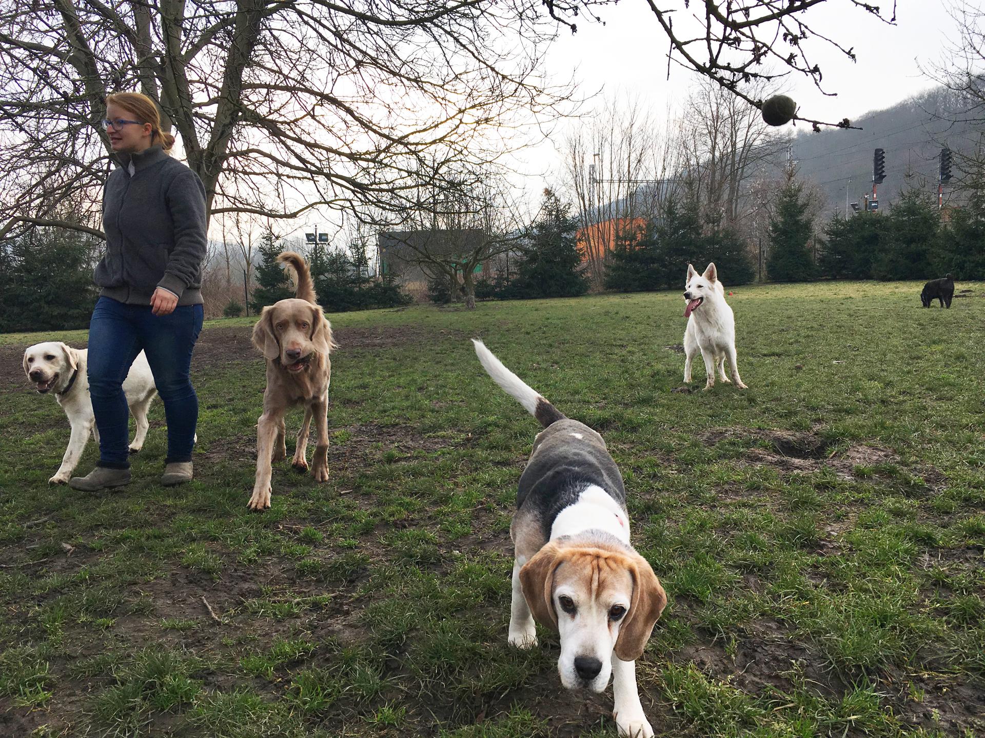 Psí hosté v Dogparku