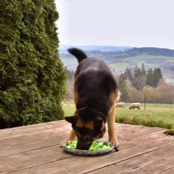 Dogsie Salad velky pes