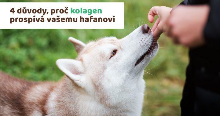 pes dostává pamlsek z ruky