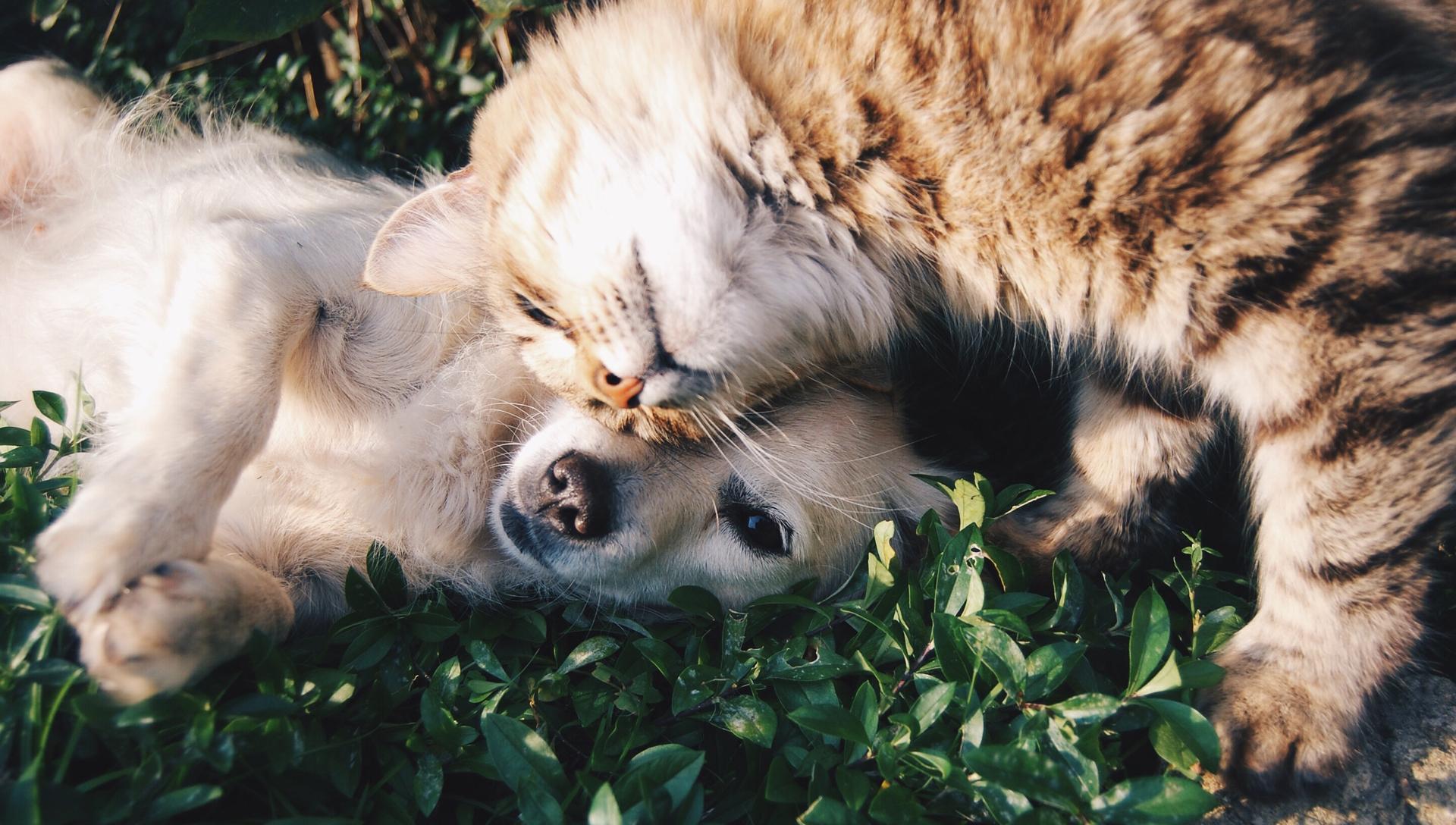 kočka mazlící se se psem