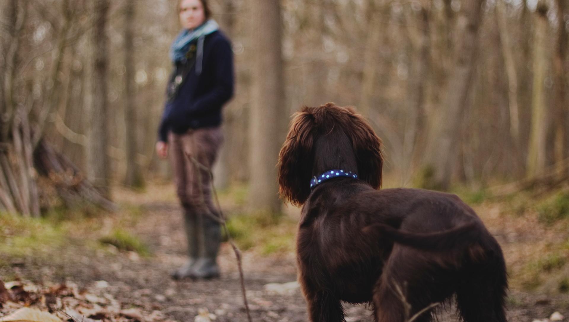 pes a žena na procházce v lese