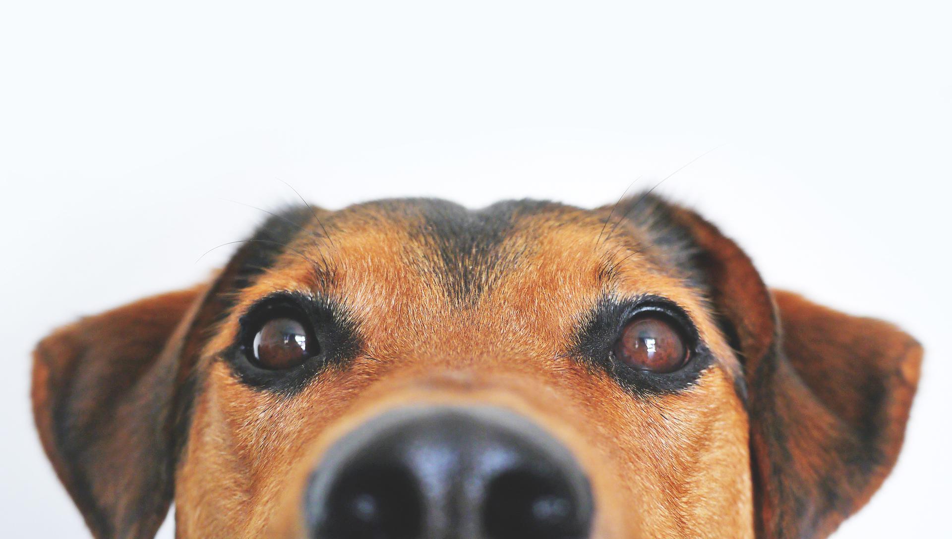 kastrace psa
