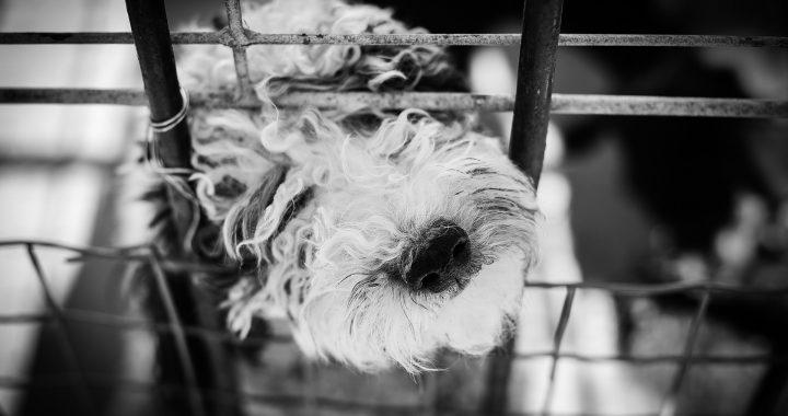 pes za mřížemi
