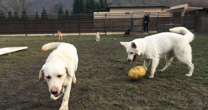 psi v hotelu Dogpark