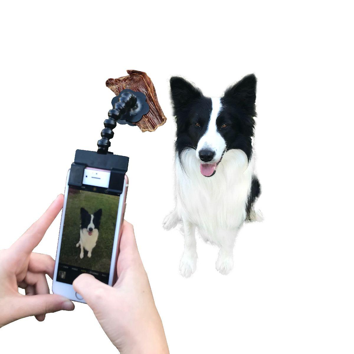 selfsie - ukázka pes